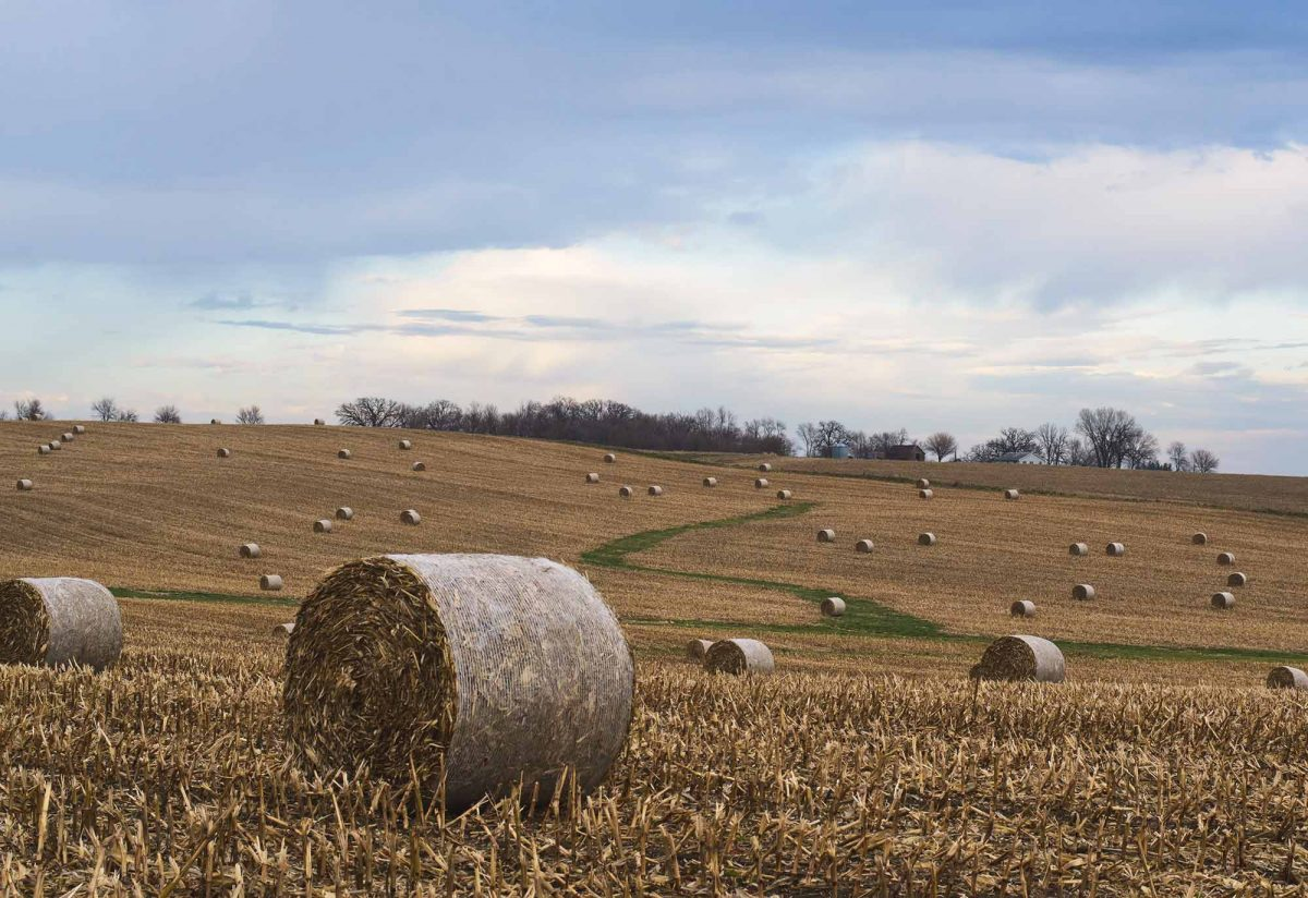 Hay bails pockmarking a vast, rolling field.