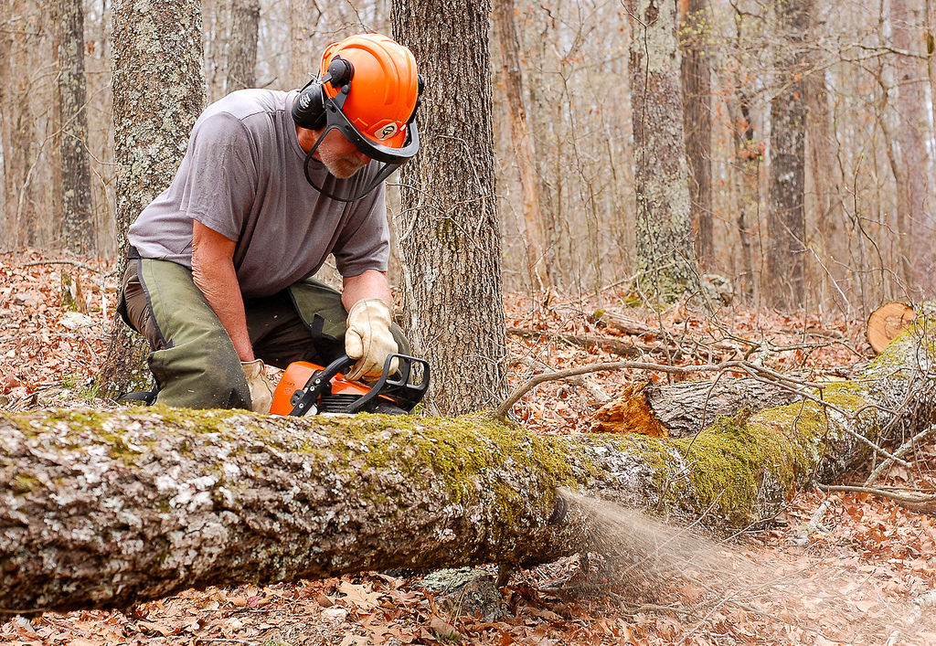 Man using a chainsaw to cut a fallen tree blocking the trail.