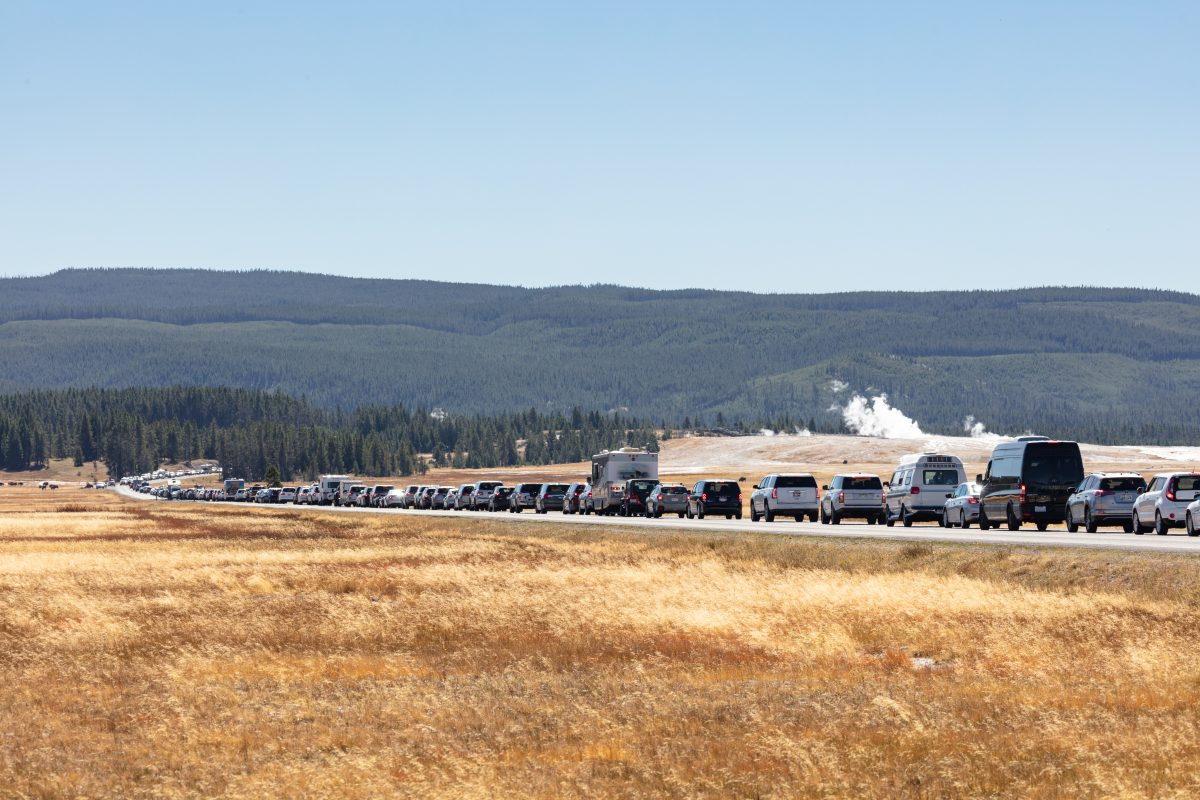 Cars wait in line to enter Yellowstone National Park