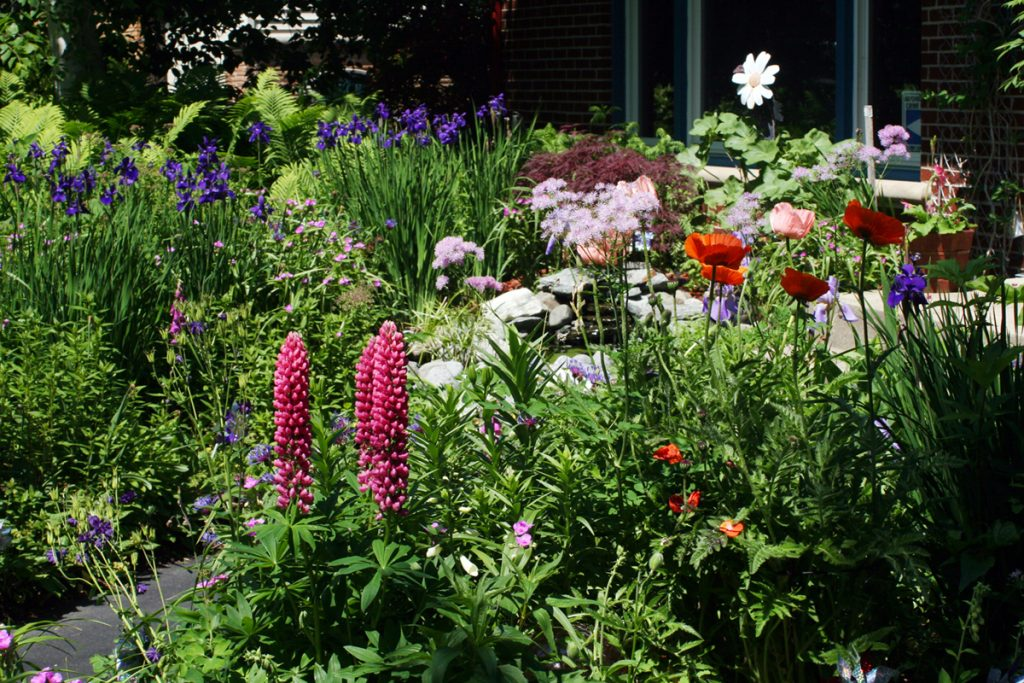A backyard flower garden