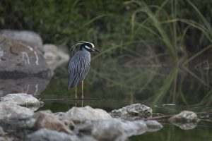A bird in the San Antonio River