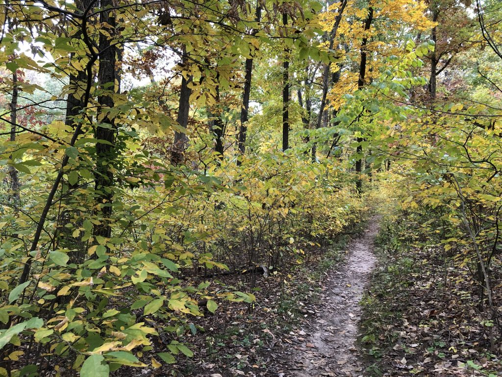 Fall hiking trail