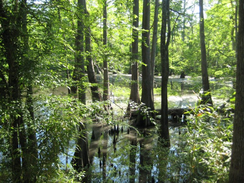 Dearman Starr Lake in Mississippi's Herman Murrah Preserve